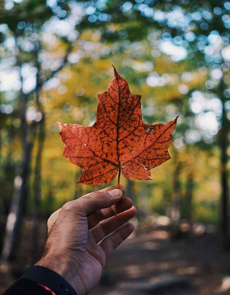 Burlington Canada maple leaf
